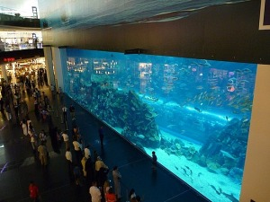 Alboom_the-aquarium-in-the-dubai-mall