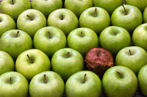 Don't let one rotten apple spoil the wholebunch